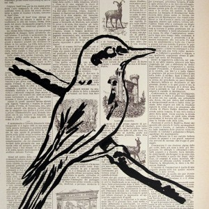 Jorge Leal - st bird, 2016, tinta china s papel, 45x30cm