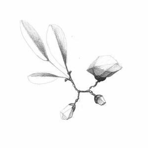 antonio-olaio-christmas-berries-2