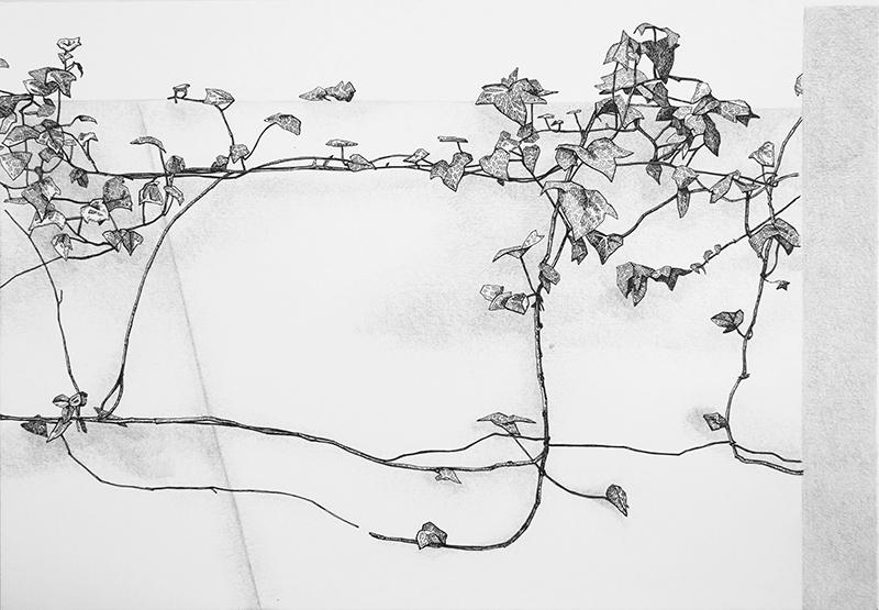 Daniela Nunes - hera ou sou 2, 2016, grafite e caneta sobre papel, 21x27cm