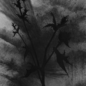Filipe Romão - Flores 02_23cmx17cm_2020, acrilico e carvão s papel