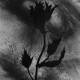 Filipe Romao - Flores 03_23cmx17cm_2020, acrilico e carvão s papel